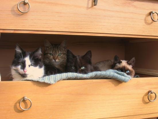Le tiroir à chats