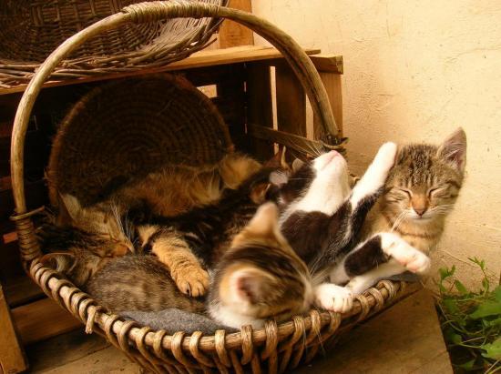 Tas de chats au repos