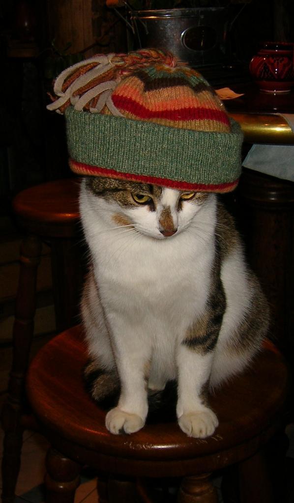 chats en bonnet