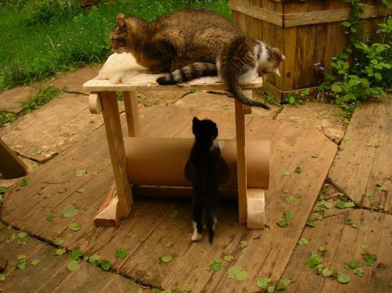 hyle-jeux-de-chats-